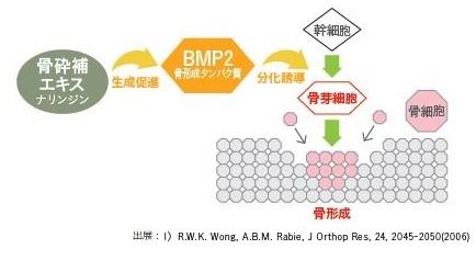 BPM-2モデル